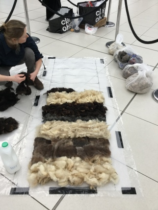 Laying the fleeces